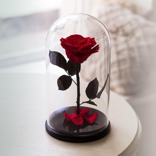 Жива троянда в скляній колбі